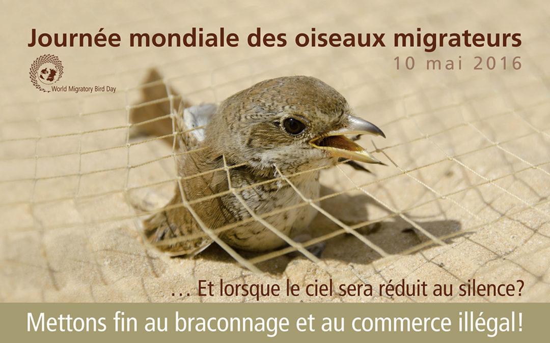 Journée Mondiale des Oiseaux Migrateurs 2016