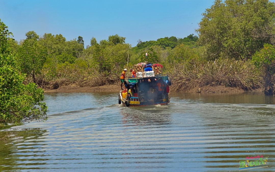 Asity Madagascar et la JMZH 2020