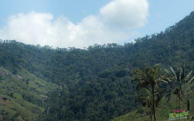 CAMPAGNE DE REBOISEMENT 2021: Lancement officiel à Tsitongambarika